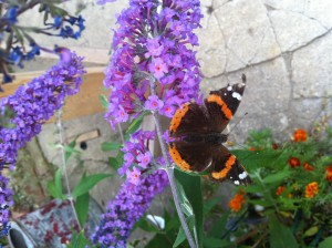 Butterfly brings us spiritual support