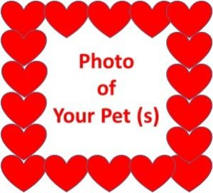 Celebrate the Love You Feel for Your Pet