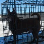Donate to Animal Causes