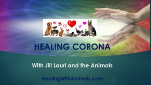 Healing Corona With Jill Lauri and the Animals